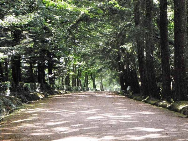 Dans la forêt de Paimpont